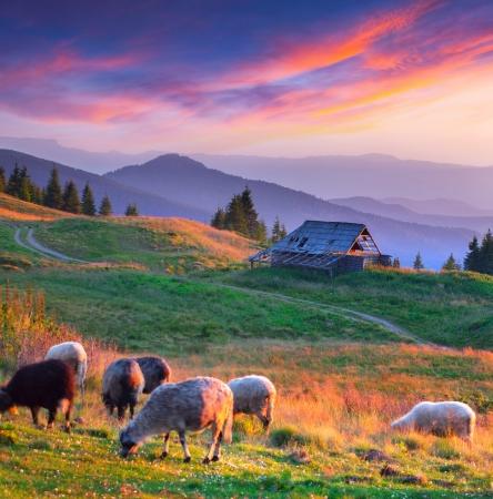Colorful autumn landscape in mountain village. Sunset Reklamní fotografie