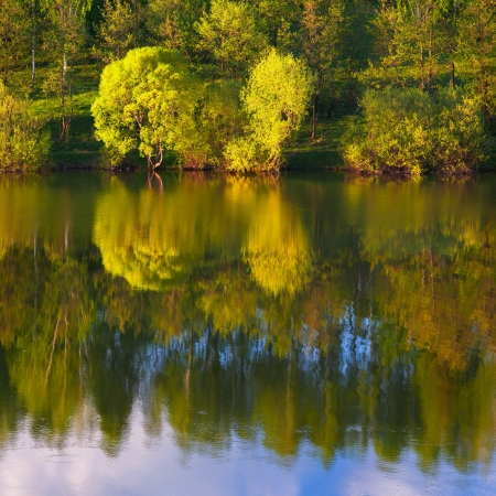 Reflection of trees in the lake photo