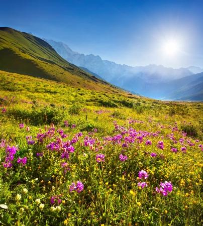 Blooming pink flowers in the Caucasian mountains 版權商用圖片 - 21626066