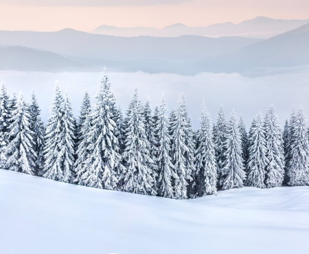 snow background: Beautiful winter landscape in the  mountains.