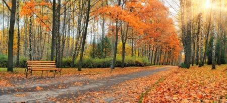 sentier: Automne tombent les feuilles dans un parc de la ville