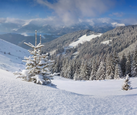 A small Christmas tree covered with snow in the winter mountains photo