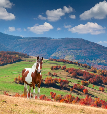 autumn horse: Colorful autumn landscape in mountains with horse
