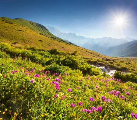 Blooming pink flowers in the Caucasian mountains photo
