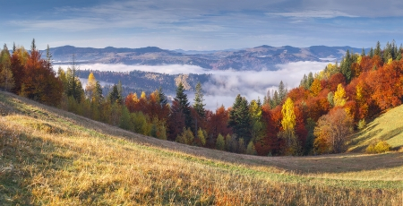 Colorful autumn morning in the mountains.  photo