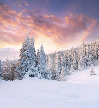 winter sunrise: Beautiful winter landscape in the mountains. Sunrise Stock Photo