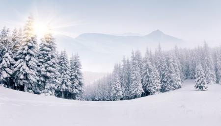 산에서 안개 낀 겨울 풍경의 파노라마