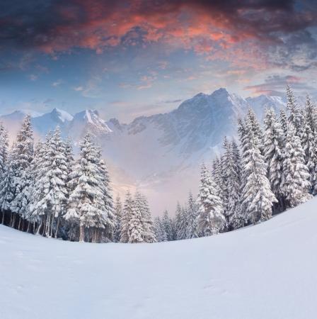 Beautiful winter landscape in the mountains. Sunrise photo