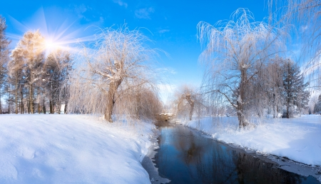 wintery day: Beautiful winter landscape in the city park