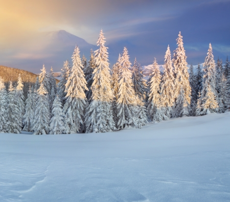 christmas landscape: Colorful winter morning in the mountains.