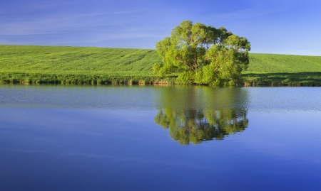Panorama with lonely tree on the green summer meadow on the lake Stock Photo