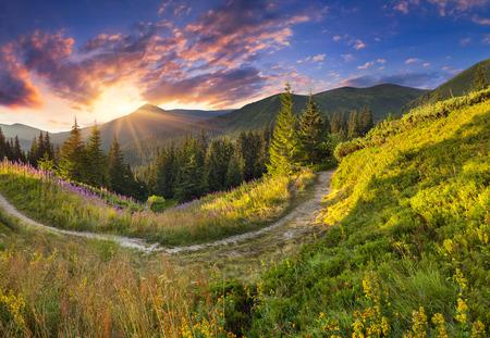 ピンクの花と山脈の美しい夏の風景。日の出