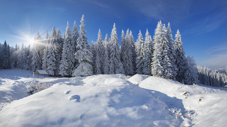 Winter fairy tale after heavy snowfall in the mountain forest photo