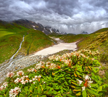 Alpine meadows in the Caucasus mountains. Upper Svaneti, Georgia, Europe. photo
