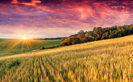 Colorful summer landscape with field of wheat and dramatic sky. photo