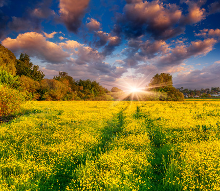 Colorful spring landscape on the meadow of yellow flowers. Dramatic sunset. photo