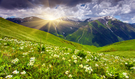 Fields of flowers in the mountains. Georgia, Upper Svaneti, Europe. photo