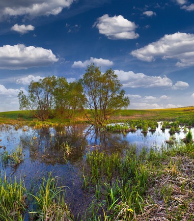 backwater: Beautiful summer landscape on the backwater