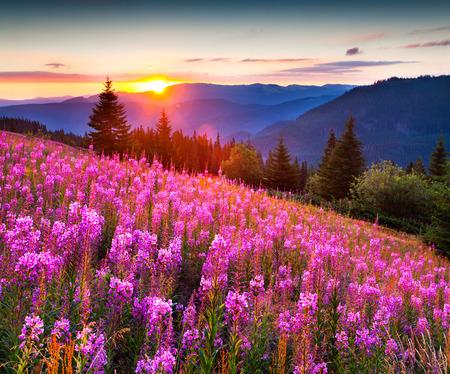 핑크 꽃과 산의 아름 다운 풍경. 일출입니다. 스톡 콘텐츠