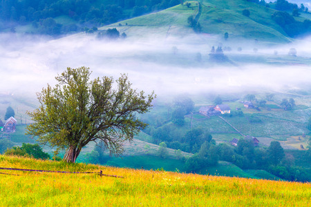 Lonely tree in the misty morning in mountains photo
