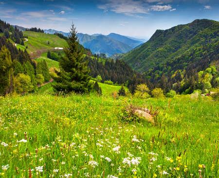 이탈리아 알프스에서 아름 다운 여름 풍경입니다. 지리적 위치 45.759739,10.164907
