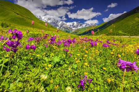 Beautiful view of alpine meadows in the Caucasus mountains. Upper Svaneti, Georgia. photo