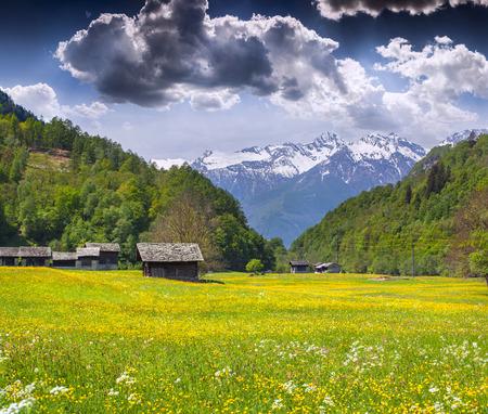 Alpine meadows near the village of Bondo. Alps, Switzerland.  photo