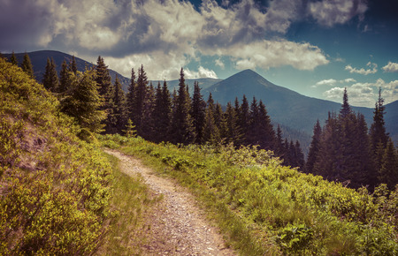 mountain meadow: Colorful summer landscape in the mountains. Retro style.