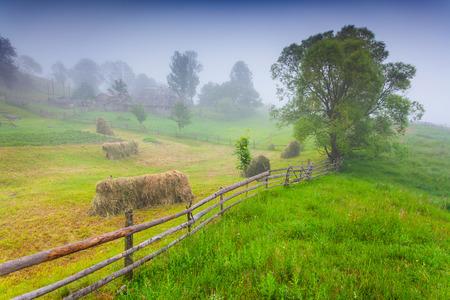 haymaking: Haymaking in a Carpathian village. Ukraine, Europe.