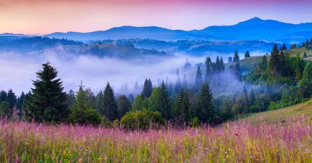 Mistige zomerochtend in de Karpaten. Stockfoto