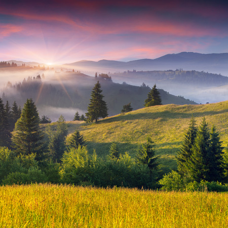 Foggy summer morning in the mountains. Sunrise. photo