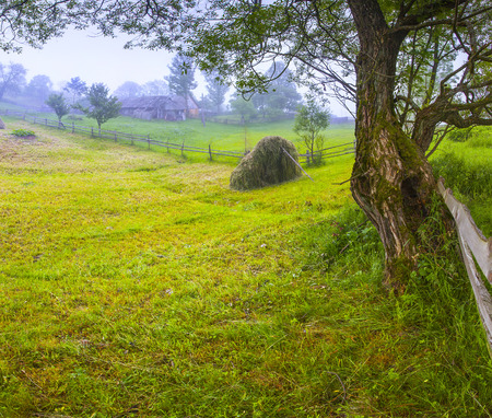 haymaking: Haymaking in a Carpathian village. Ukraine, Europe. Geolocation 48.282893,24.408488