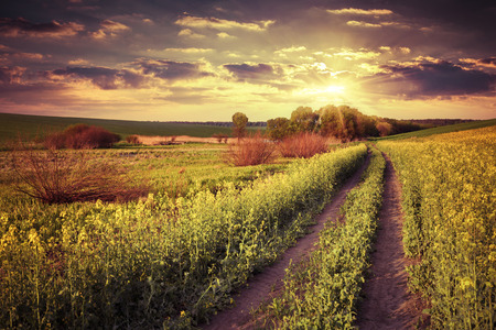 Summer landscape with a field of yellow flowers. Retro style. photo