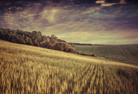 Summer landscape with field of wheat and dramatic sky. Retro style. photo