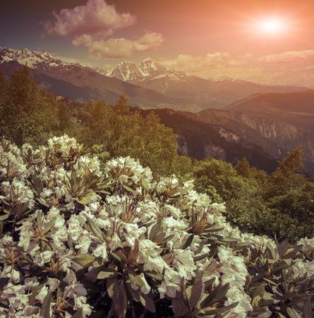 Alpine meadows in the Caucasus mountains. Retro style. photo