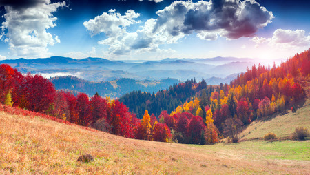 paisagem: Paisagem colorida do outono na aldeia de montanha. Manhã de nevoeiro nas montanhas dos Cárpatos. Cume Sokilsky, Ucrânia, Europa.