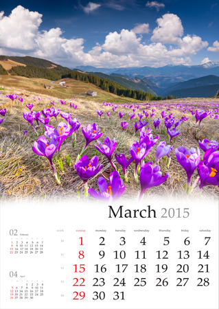 2015 Calendar. March. Blossom of crocuses in spring in the mountains