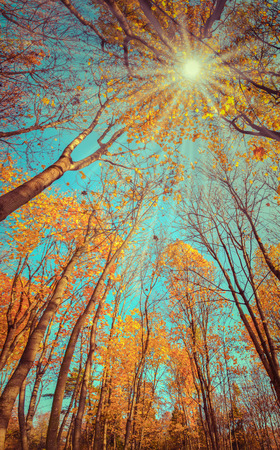 branches and leaves: Majestic colorful forest with sunny beams. Natural park. Dramatic morning scene. Red autumn leaves. Carpathians, Ukraine, Europe. Retro style.