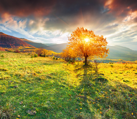 sunny day: Lonely autumn tree against dramatic sky in the mountains