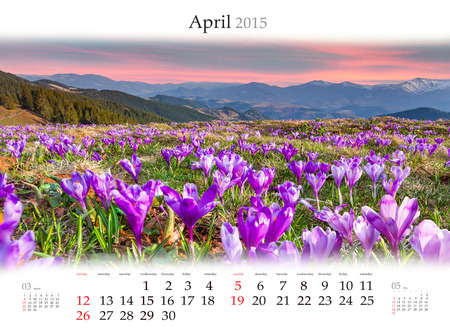 Calendar 2015 for April. Blossom field of the crocuses in the mountains Stock Photo