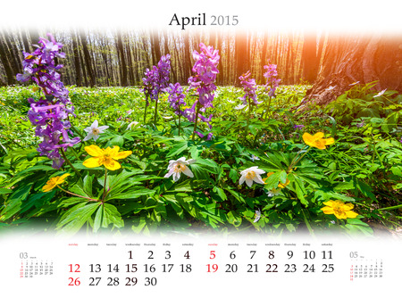 Calendar 2015 for April. Blossom field of flowers in the forest