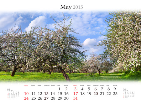 Calendar 2015 for May. Blooming apple gardens in the spring