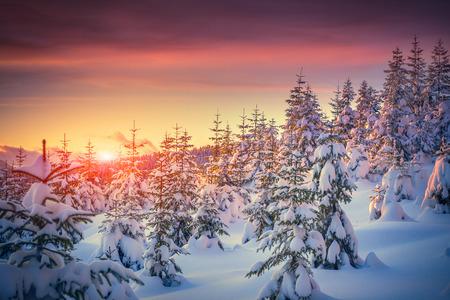 산 숲에서 겨울 일출 다채로운 풍경