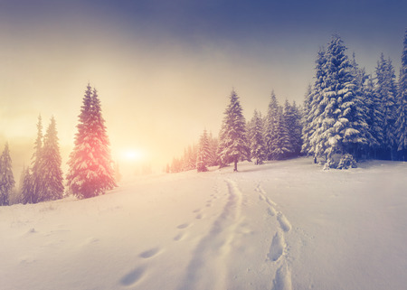 Foggy winter sunrise in the mountains. Stock Photo
