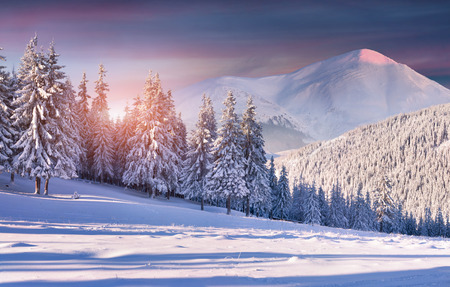 Colorful winter sunrise in the snowy mountains Stock Photo