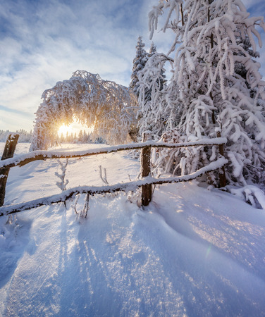 Beautiful winter landscape in the mountain forest. photo