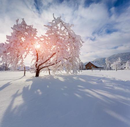 Winter morning in the Carpathian village. Sunny winter morning. photo