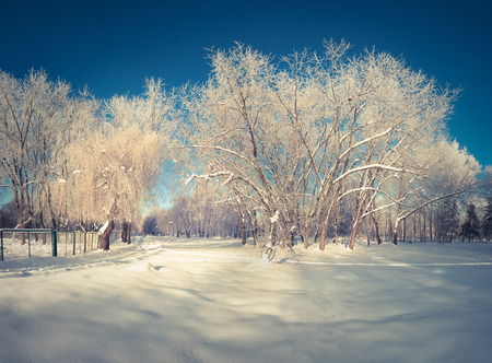 cold weather: Beautiful winter landscape in the city park