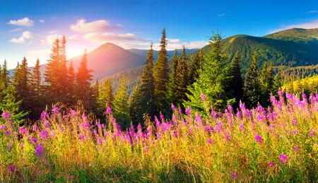 Mooie herfst landschap in de bergen met roze bloemen. Stockfoto