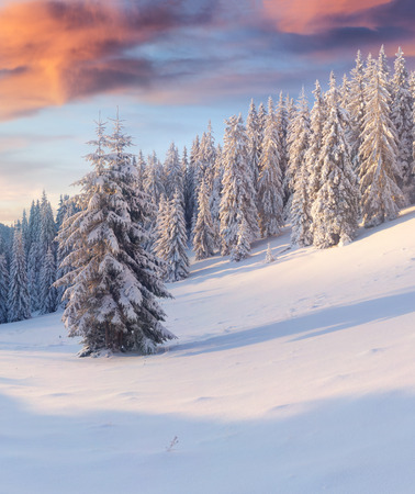 views of the mountains: Beautiful winter sunrise in the mountain forest. Stock Photo